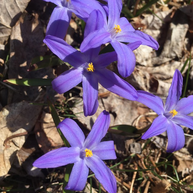 Outside in April:  Spring Flower Edition!