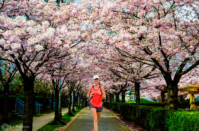 Runner under Cherry Blossom, Burnaby, BC, Canada