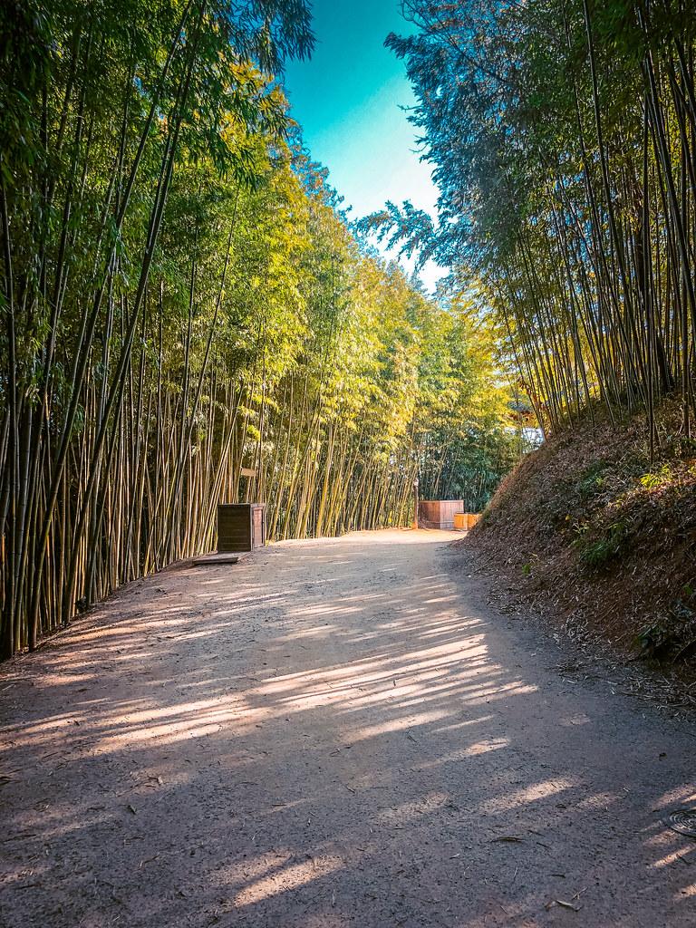 Large Walking Paths Damyang Bamboo Forest