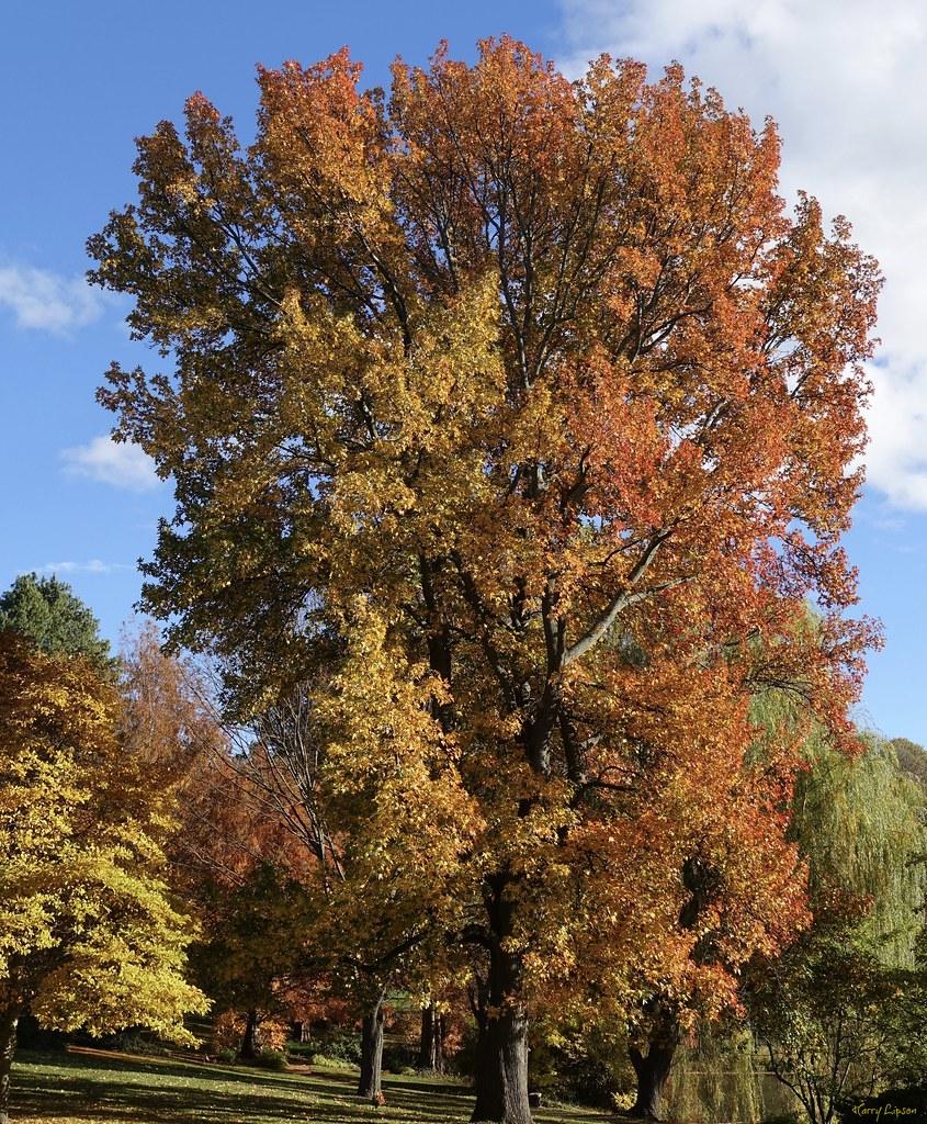 Peak Fall Color