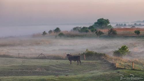 Misty morning (HFF)