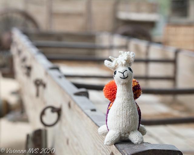 The adventures of Alpaca