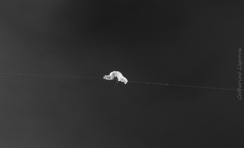 Noir et Blanc / Sépia / Désaturation partielle / Traitements divers - Page 2 49813769266_b7cddff9fd_o