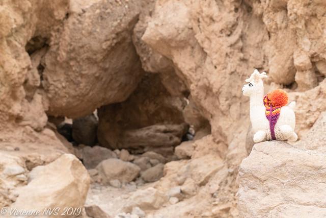 The Adventures of Alpaca part 2