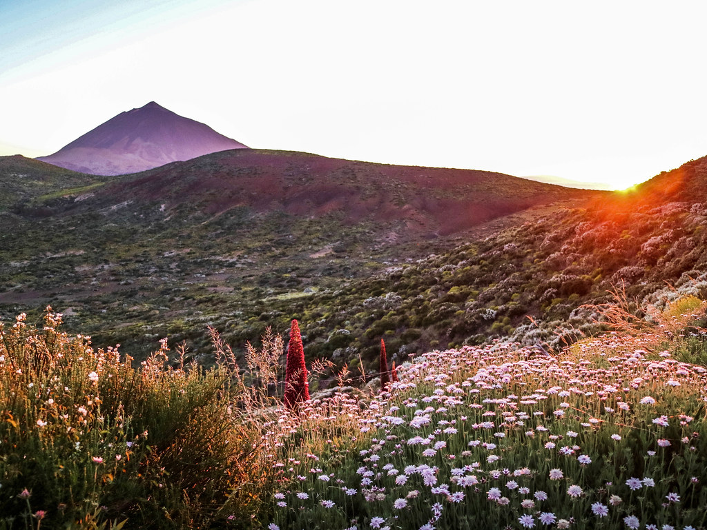 Atardecer en el Parque Nacional el Teide durante la primavera