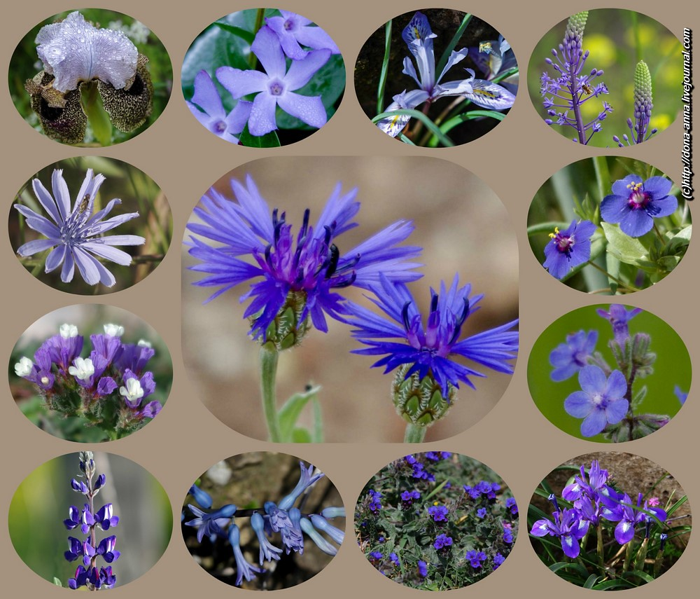 Blue-flowers-collage-a