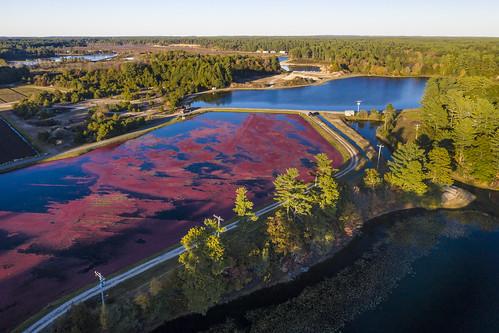 farm equipment cranberry fruit harvest bogs water irrigation