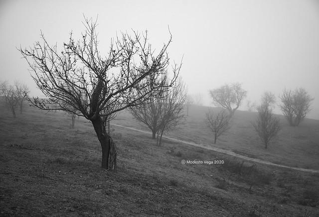 Trees in the fog/Arboles en la niebla [In Explore 27 April 2020]