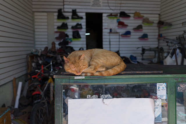 El gato sin botas.