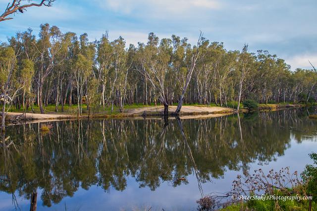 Reflections - Murray River, Near Yarrawanga, Australia