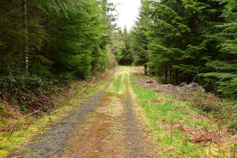 Road hike