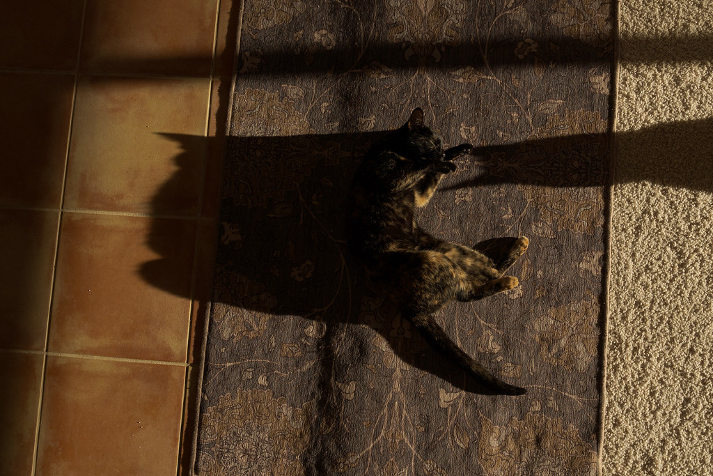 Our cat Trixie curls up on the carpet next to the shadow of our cat Sam in January 2020
