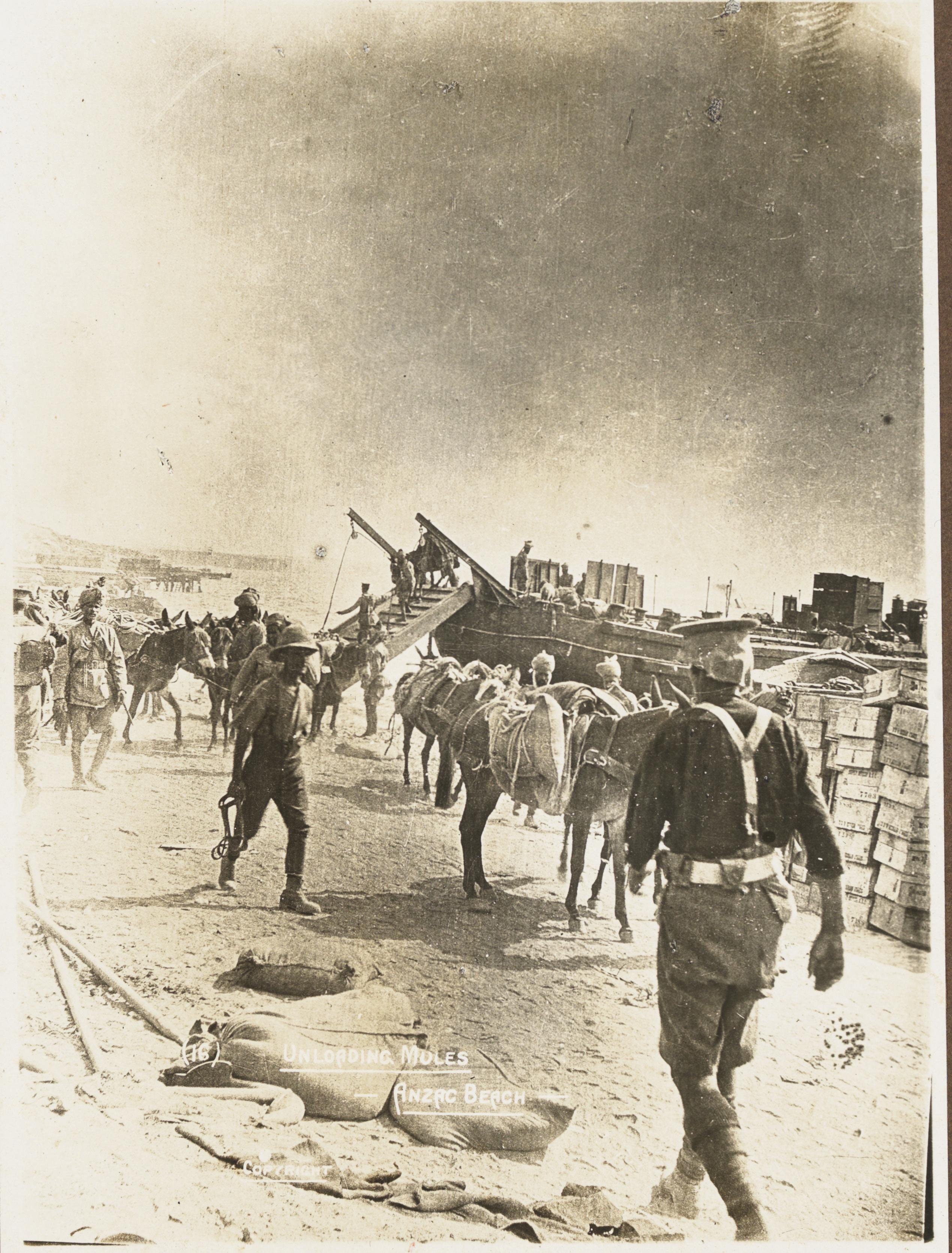 Unloading mules, ANZAC Beach, 1915