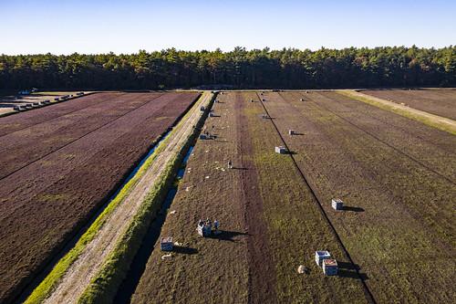 usda departmentofagriculture usdepartmentofagriculture fruit farm harvest equipment cranberry bogs