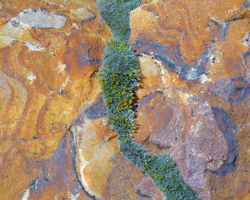 eechillington nikond7500 viewnxi song music mountolympus utah hiking patterns abstract rock lichen