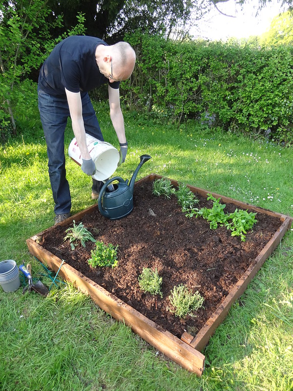 Phil waters the herb bed