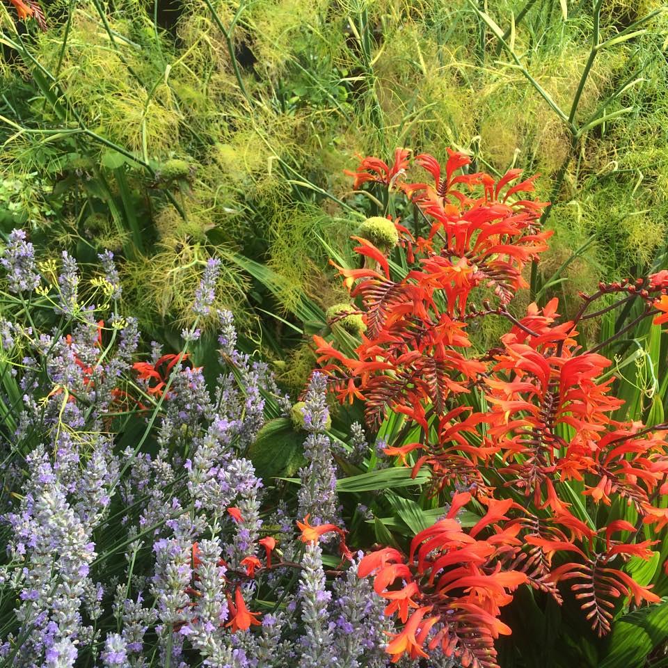 Stenton Garden