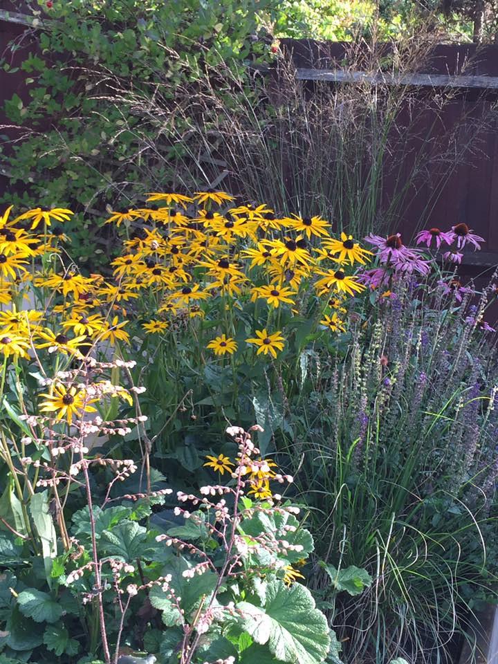 haddington garden2