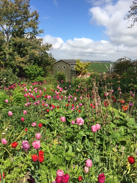 East Saltoun garden