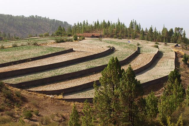 Jable covered potato fields, Vilaflor, Tenerife