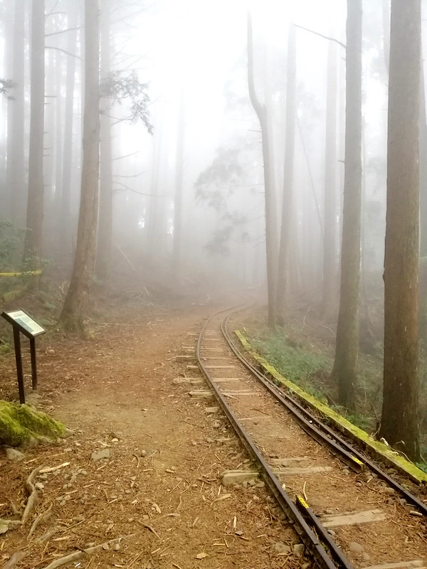 The easy part of Tefuye Old Trail. The mist made the woods look so mystical. Photo by LOHAS Association
