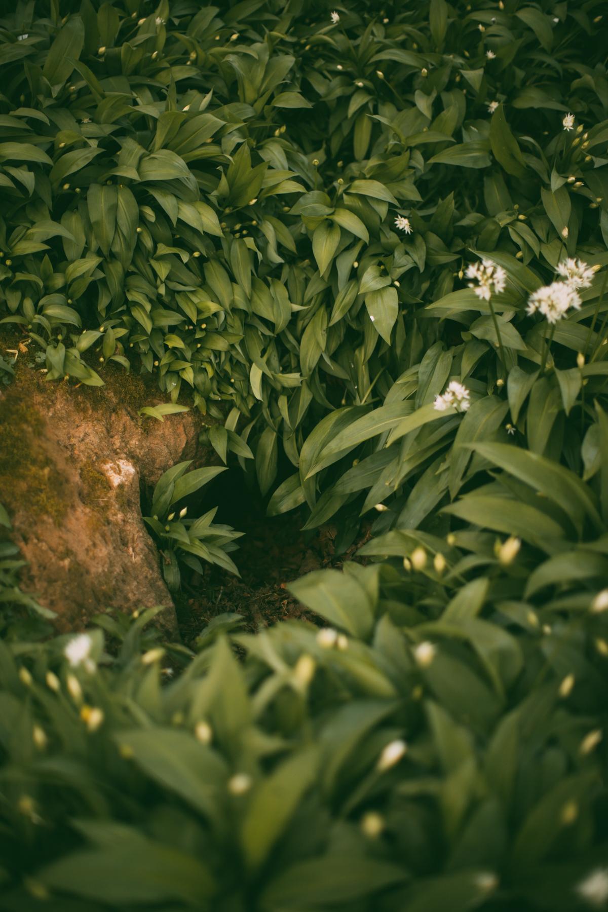 wildgreen-53