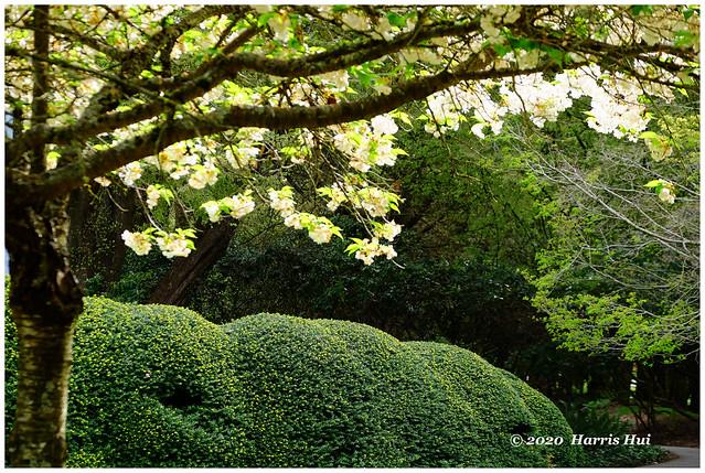 The Last Blossoms - Minoru XT8814e