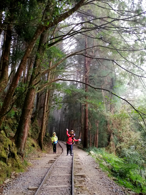 Hikers look so small next to those big trees. Photo by LOHAS Association