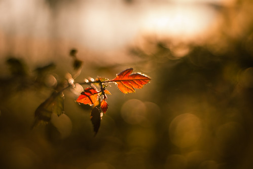 nature plant day closeup outdoors leaf beauty growth focus foreground fragility selective bokeh macro texture blurry sunset tranquility branch