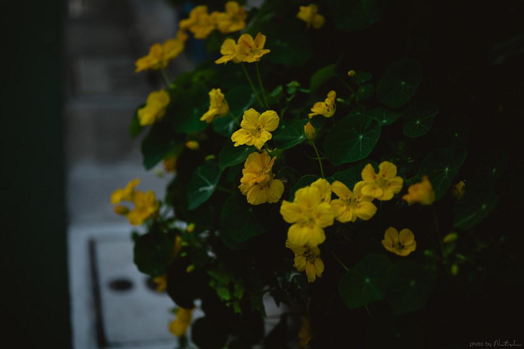 DSC_1985_01