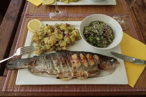 Gegrillte Forelle mit Kartoffelsalat und Gurkensalat (mein Teller)