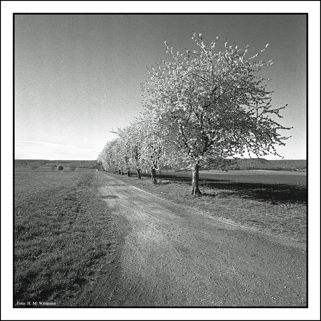 Kirschen-Allee 2, Hasselblad 903 SWC