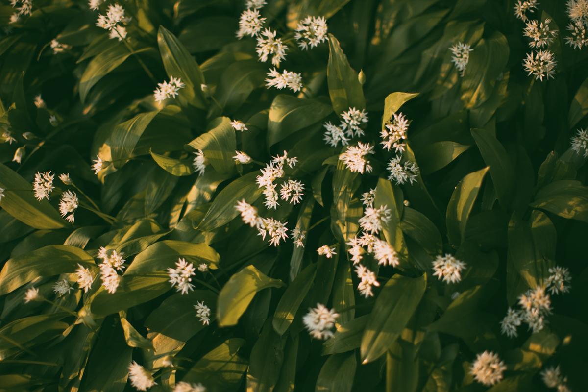 wildgreen-76