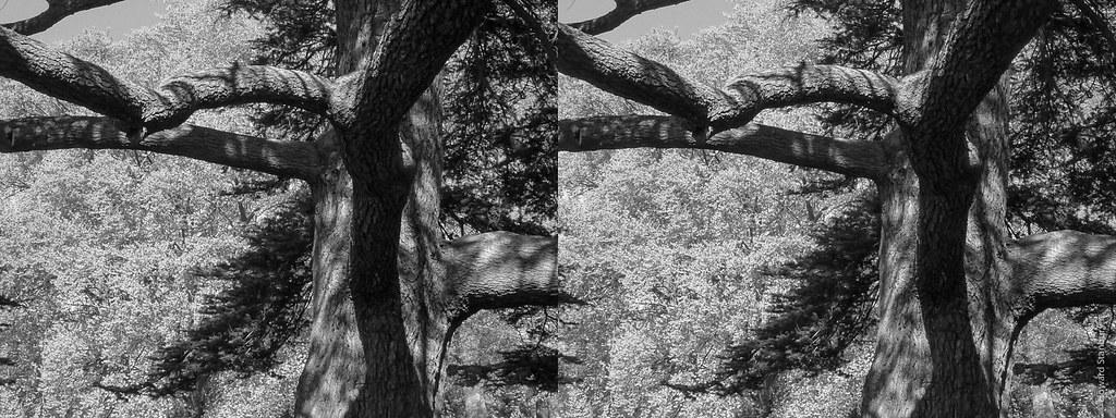 Bury Knowle trees