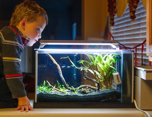 child with planted fluval spec v aquarium