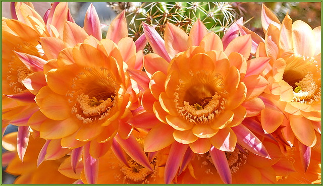 Cactus Flowers Are So Underrated