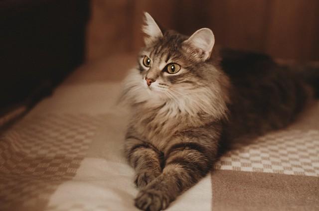 Kitty. Morning.