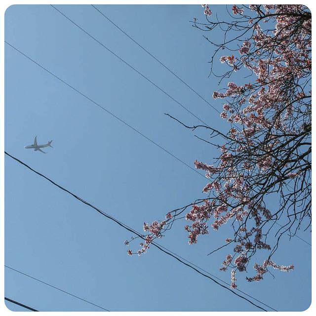 Spring Flightpath