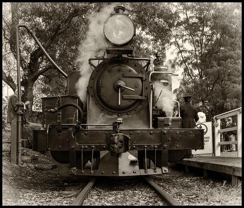 австралия australia melbourne мельбурн пейзаж landscape паровоз locomotive puffer railway железнаядорога лес forest dmilokt сепия sepia