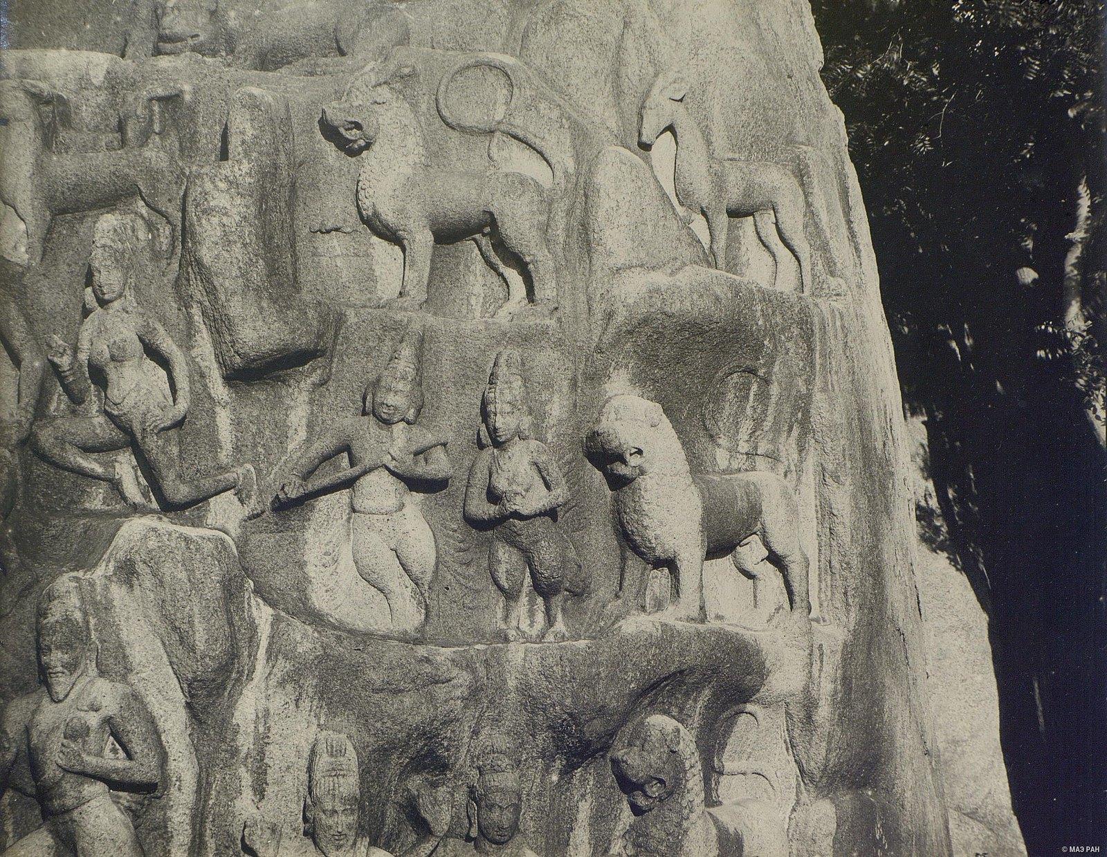 Мамаллапур (деталь рельефа со львами) (4)