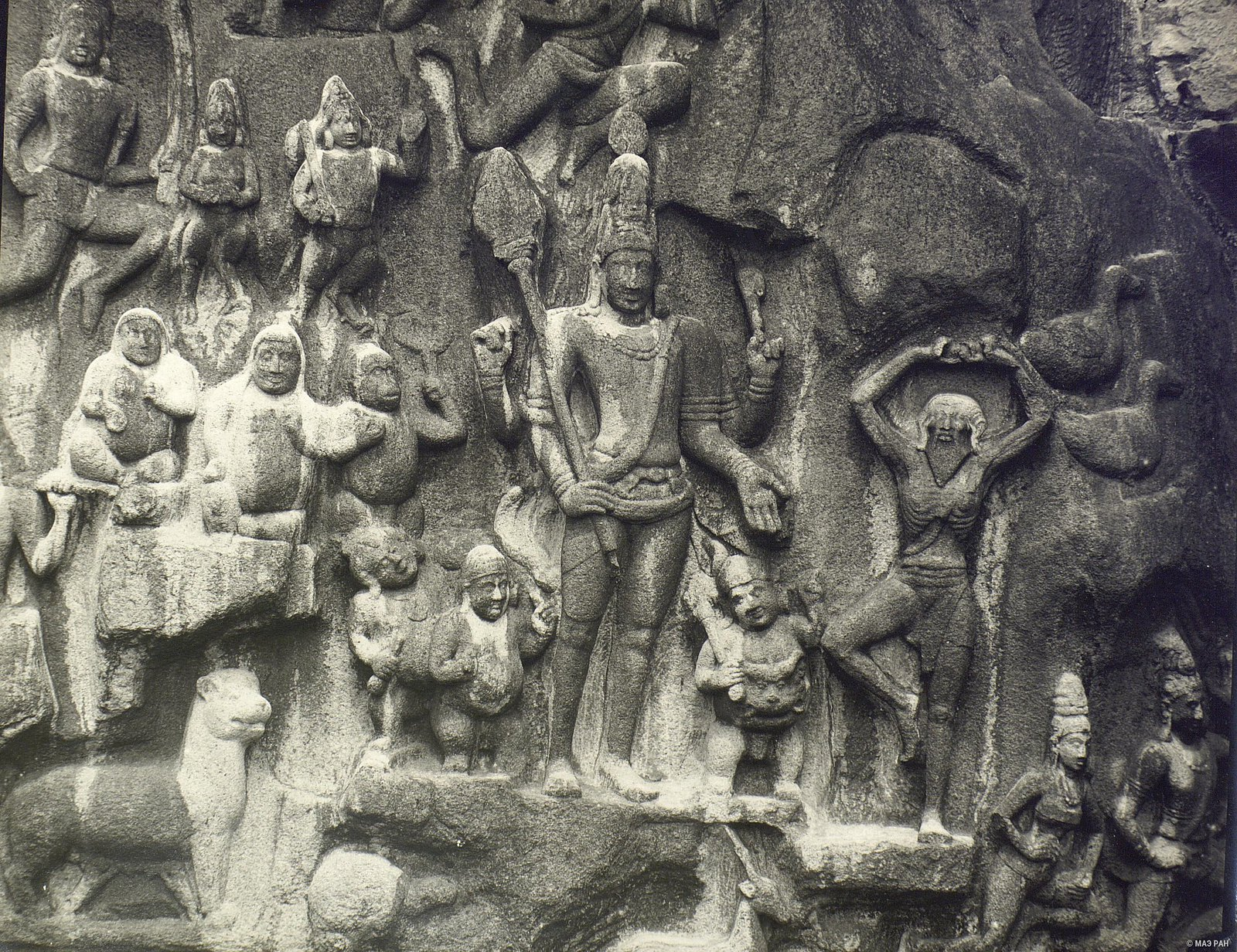 Мамаллапур (деталь рельефа «Сцена подвижничества Арджуны»)