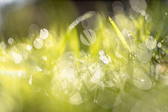 Super Green (EXPLORE)