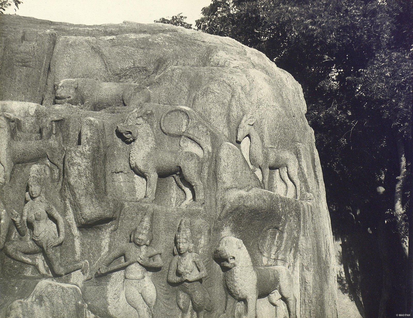 Мамаллапур (деталь рельефа со львами) (2)