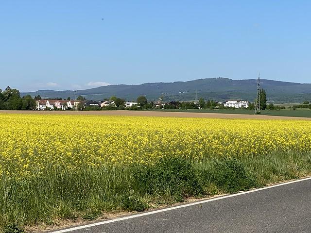 Village near the Rhine River in Walluf near Wiesbaden - in the Back Ground the Taunus Hills