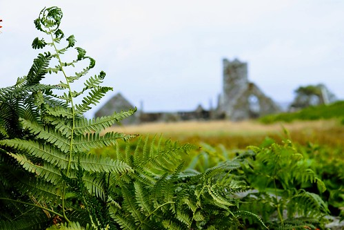 fern green ruin bokeh nature plants flora cork westcork baltimore sherkin island coast ireland wildatlanticway munster travel