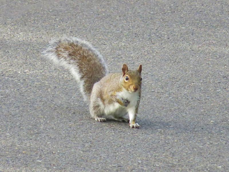 Squirrel at Riverfront Park