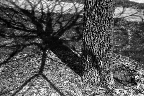 Tree shadow | by Jim Grey