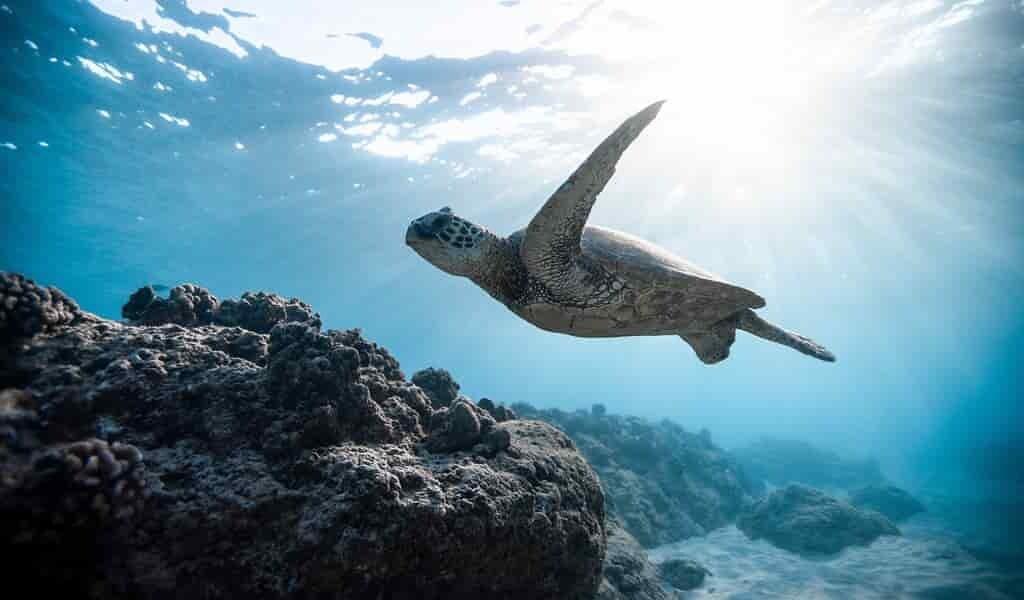 réchauffemen-climatique-et-zones-marines-protégées