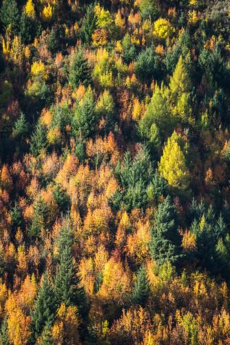 Autumn in NZ