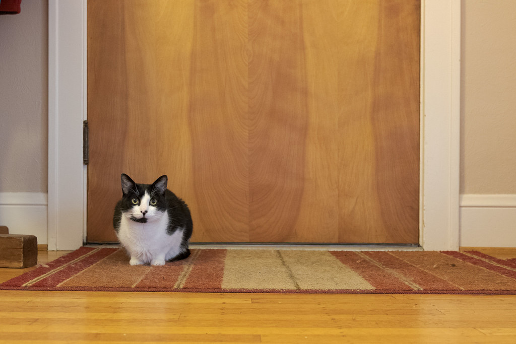 Our cat Boo sits on the throw rug in front of the door in October 2014